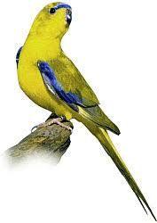 Neoféma Modrokřídlá - 20 kg