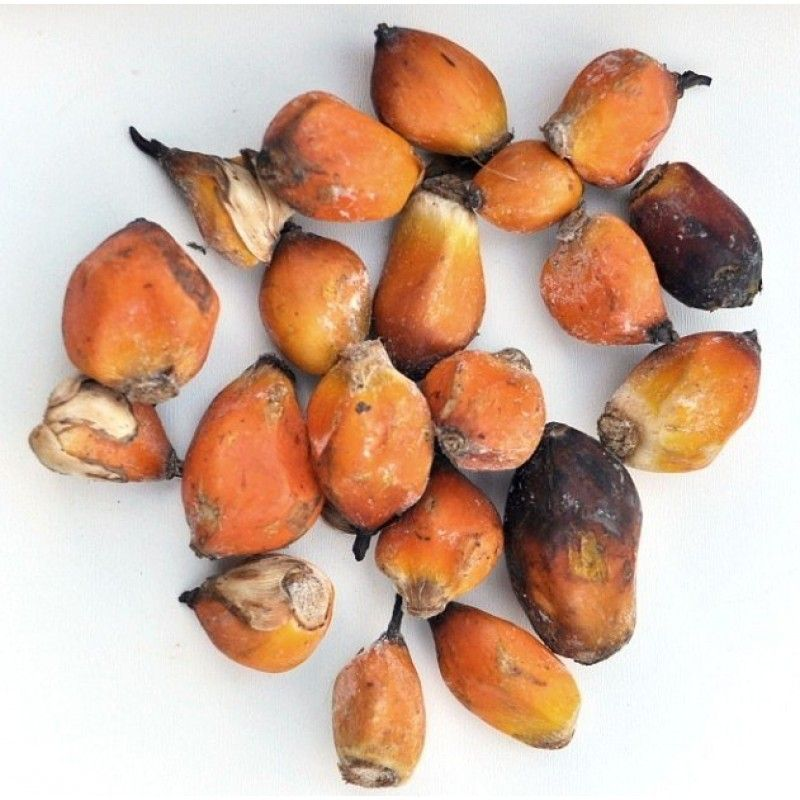 Palmové ořechy - 1kg