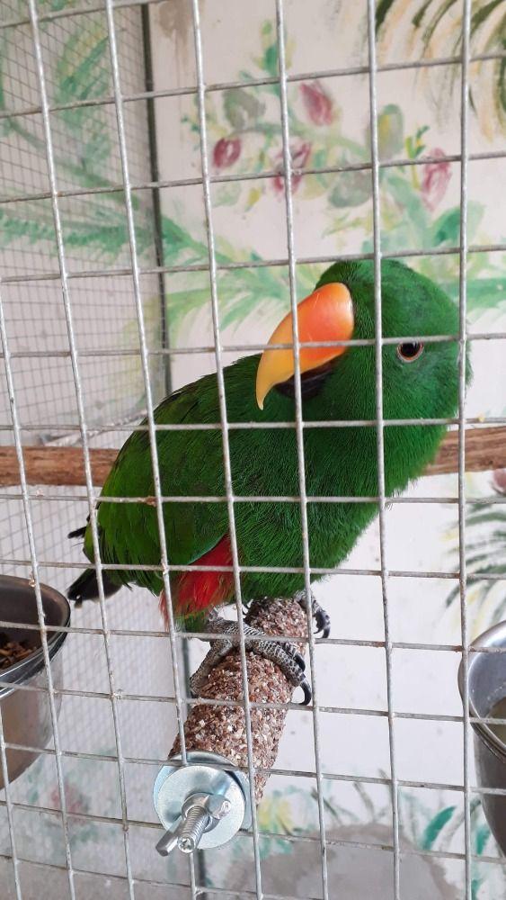 Brusné bidlo (střední papoušek) 20 cm Ø 3,5
