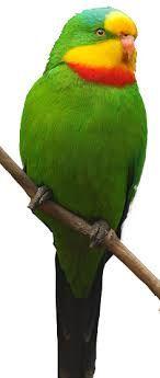 Papoušek Nádherný ( 1 - 10 kg rozvážené )