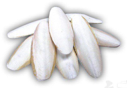 Sépiová kost 15 - 25 cm